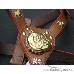 Leather harness motives English Bulldog
