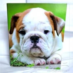 Classeur Bulldog