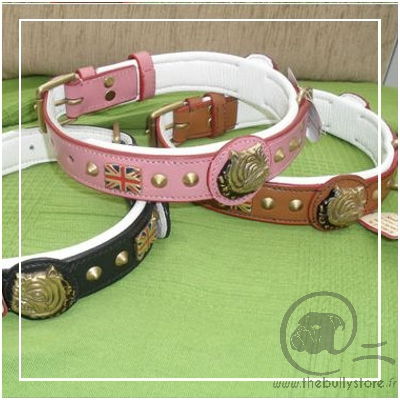 collier pour chien bulldog anglais