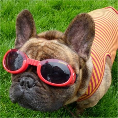 Solar glasses red Doggles